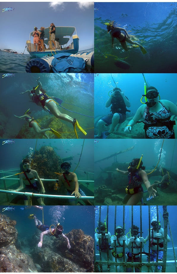 Easy Dive Tour with Harmony, june 6